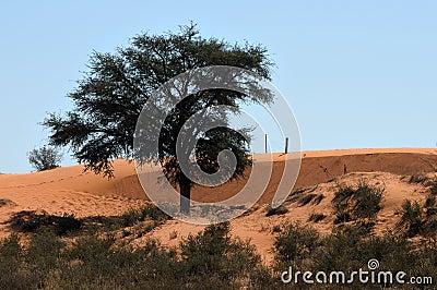 Kalahari farm scene, South Africa