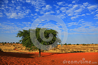 Kalahari pustynia