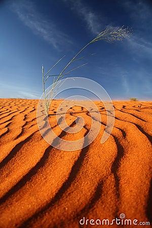 Kalahari red sand dune Namibia