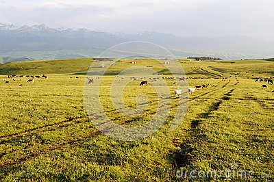 Kalajun grassland at sunset