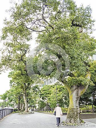 Kamakurahoofdstraat Redactionele Foto