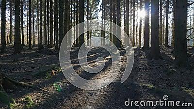 Kamerabewegung alonga ein Weg durch in einem gezierten Wald stock video