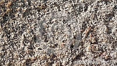 Kamienna tekstura plenerowa zbiory