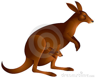 Kangaroo with the baby in