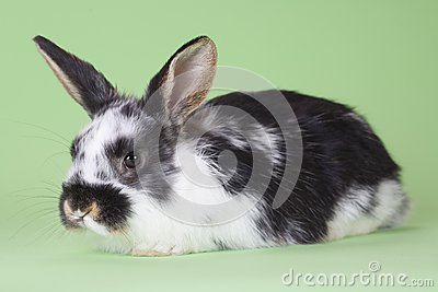 Kanin isolerat prickigt
