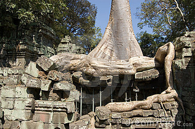 Kapok Tree and Ancient Ruins