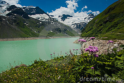 Kaprun area, lake, flowers and Alps