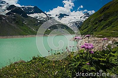 Kaprun area, lake, flowers and Alps