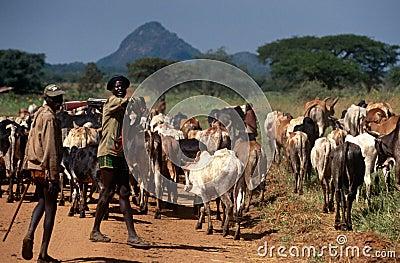 Karamojong cattle herders with guns, Uganda Editorial Image