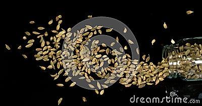 Kardamon, elettaria Cardamomum, pikantność Spada przeciw Czarnemu tłu, Crockery, zwolnione tempo zbiory