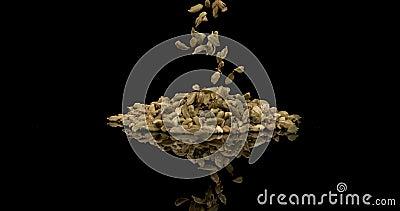 Kardamon, elettaria Cardamomum, pikantność spada przeciw Czarnemu tłu, zwolnione tempo zbiory