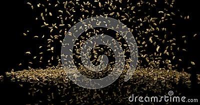 Kardamon, elettaria Cardamomum, pikantność Wybucha przeciw Czarnemu tłu, zwolnione tempo zdjęcie wideo
