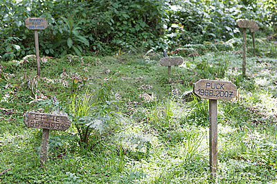 Karisoke Research Center gorillas graves Editorial Stock Photo