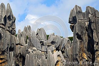 Karst landforms,Stone forest