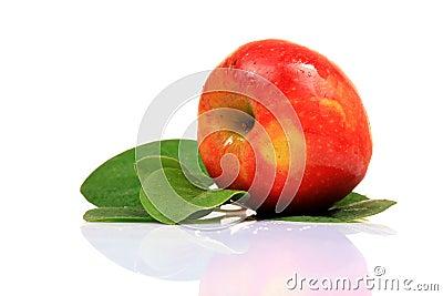 apple ko peeing