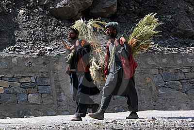 Kashmiri Man with grass Editorial Image
