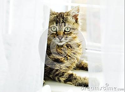 Kat bij het venster