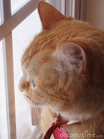 Kat bij Venster