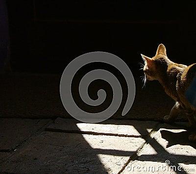 Kat in de schaduwen
