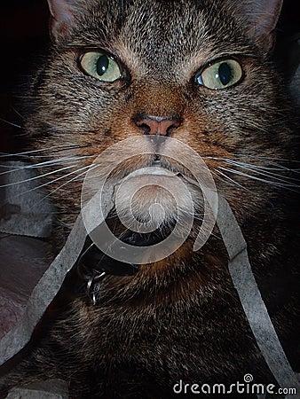 Kat die lint eet