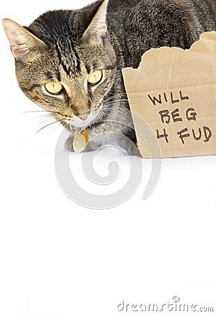 Kat die voor voedsel bedelt