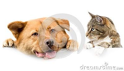 Kat en hond boven witte banner