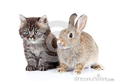 Kat en konijn