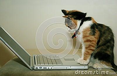 Kat gebruikend de computer
