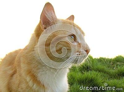 Kat in het gras