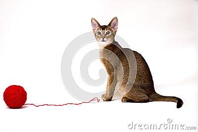 Kat met clew