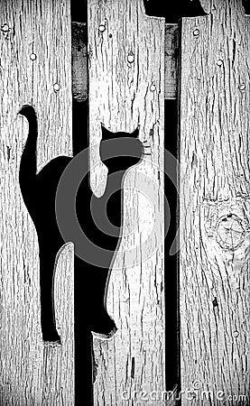 Kat in Omheining