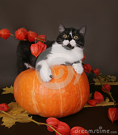 Kat op een pompoen