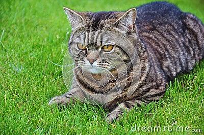Kat op het gras
