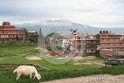Kathmandu, Boudha