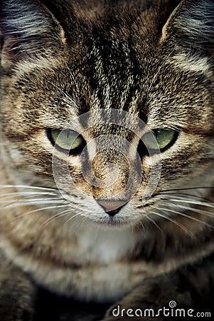 Katt ögon