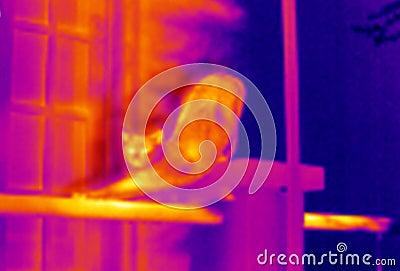 Katt som sträcker thermographen