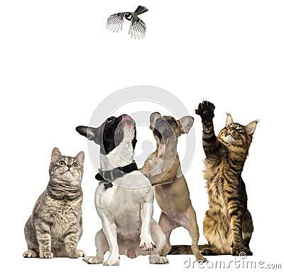 Katten en honden die vogel het vliegen proberen te vangen stock foto afbeelding 44429603 - Te vangen zwart wit ontwerp ...