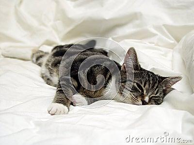 Katten ta sig en tupplur