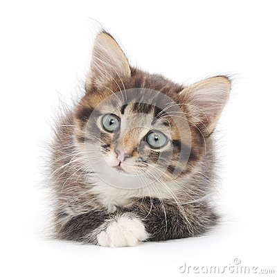 Kattunge på en vit bakgrund