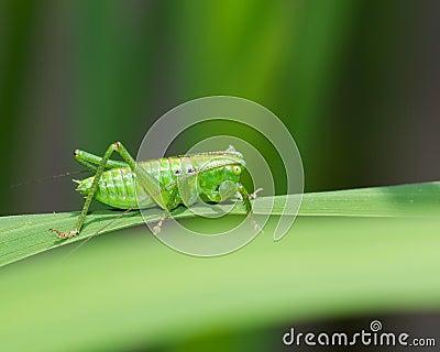 Katydid on a leaf