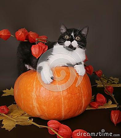 Katze auf einem Kürbis