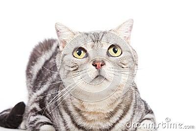 Katze, die oben schaut