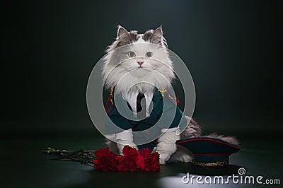 Katze gekleidet als General
