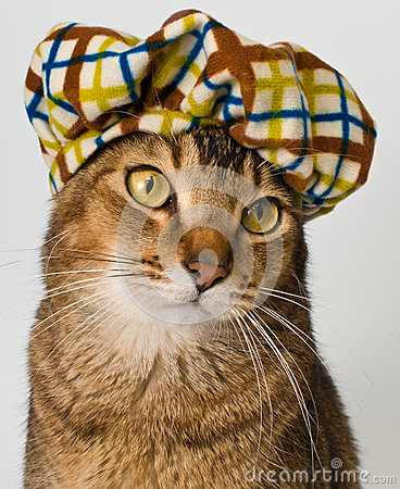 Katze im Hut im Studio