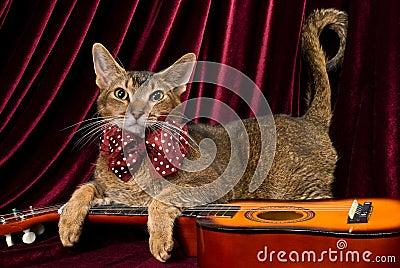 Katze mit Gitarre