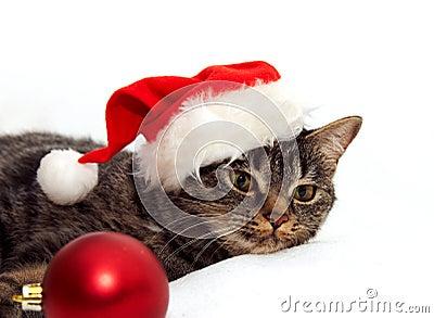katze mit weihnachtskugel stockfotografie bild 22374062. Black Bedroom Furniture Sets. Home Design Ideas