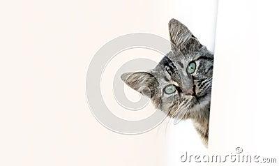 Katze-Spähen