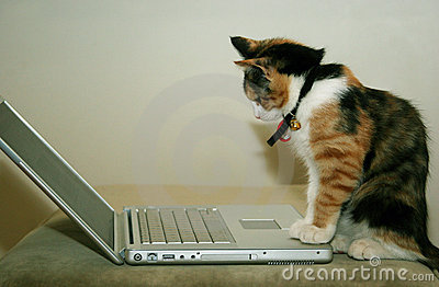 Katze unter Verwendung des Computers