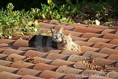 Katzen auf einem heißen Dach