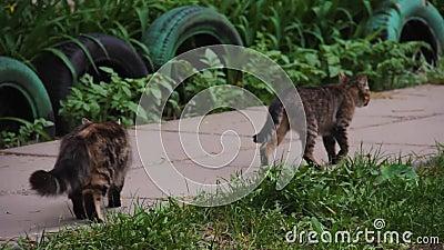 Katzen der Stadt gehen den Weg im Garten entlang Obdachlose Tiere stock footage